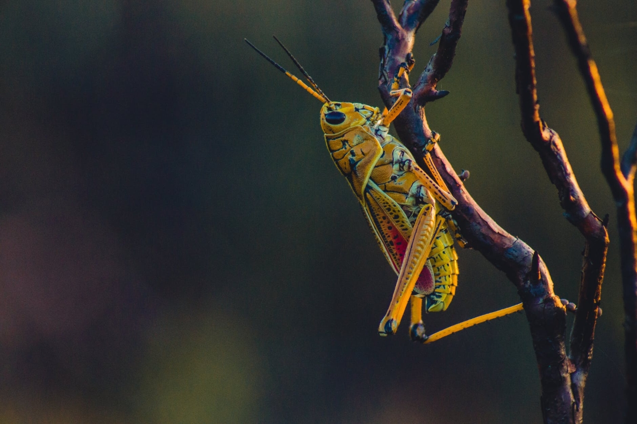 Las Vegas GrasshopperSwarms.